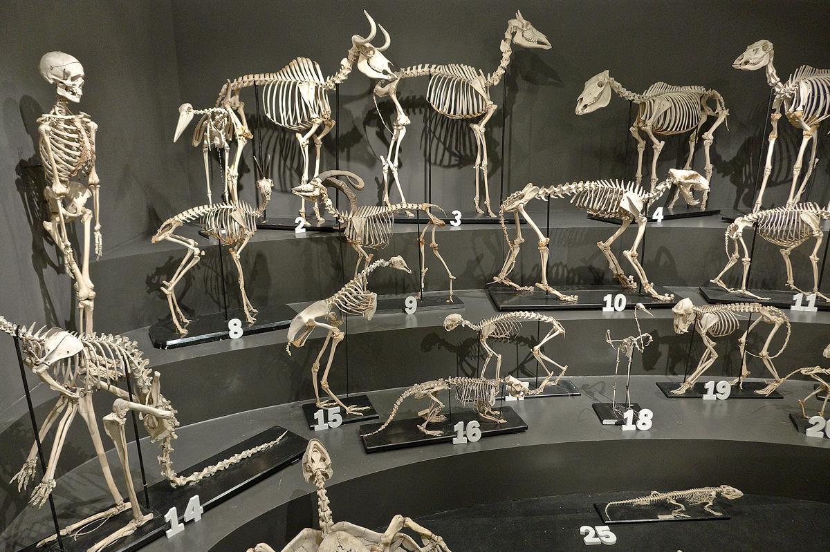 Museo di storia naturale risalente incontri vs relazione aperta